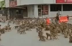 """فيديو مرعب.. فيلم """"كوكب القردة"""" يتحول لحقيقة في تايلاند"""