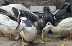 استئناف المتهمة بالنصب على المواطنين بـ «ريش البط» على حبسها عاما لـ 14 أكتوبر