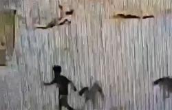 كلاب ضالة تلاحق طفلاً بتبوك.. والأهالي يطالبون بحل عاجل