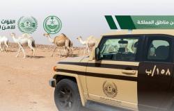 """""""الأمن البيئي"""" توقف 27 مخالفًا ارتكبوا مخالفات رعي عدة"""