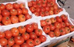 نقيب الفلاحين يعلن موعد انخفاض أسعار الخضروات