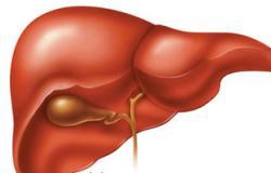 جمعية رعاية مرضى الكبد تحتفل  باليوم العالمى للالتهاب الكبدى الوبائى