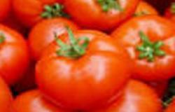 """الزراعة: مصر الخامس عالميا فى زراعة الطماطم ولا نستورد من """"إسرائيل"""""""