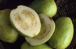 الجوافة تحمى الجسم من الإسهال وتقى من سرطان الرئة