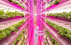 بالصور.. ياباني يحوّل «مصنع» إلى أكبر مزرعة مغلقة في العالم