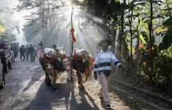 بالصور.. «ماراثون الجاموس» في بالي