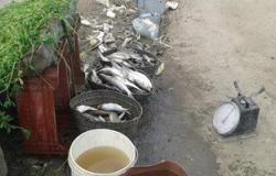 بالصور.. مراقبة الأغذية بالبحيرة تضبط كمية أسماك فاسدة